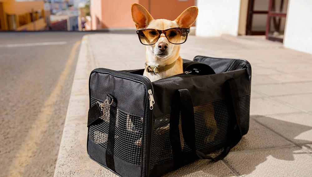 Перевозка животных на рейсах авиакомпании Россия